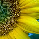 Sunflower smiles by Denise Goldberg