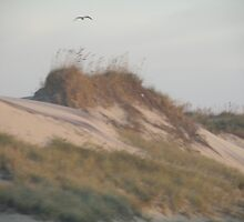 Outer Banks Sand Dune by Chirleen Evans