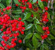 Frozen Winter Berries by AhArtography