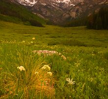 Piney Valley by Paul Gana