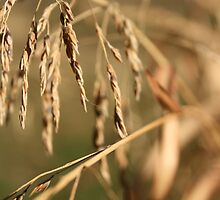 Grains 3 by Rebecca Leonard