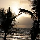 Palm Fronds Kiss at Dawn 2008 by sunism