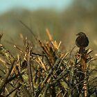 Sparrow watch  by Rob Hawkins