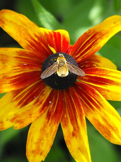 Glow Little Bumble Bee! by Tracy Faught