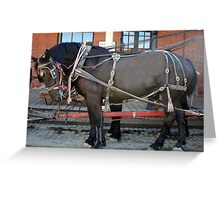 French Percheron Horses Take the Lead Greeting Card