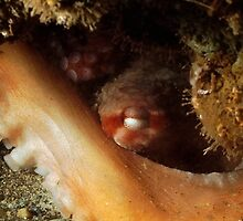 Eye of the Octopus by Greg Amptman