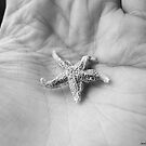 Tiny Starfish by Jennifer Finn