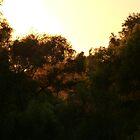 trees in the light of a sunset - arboles en la luz de una puesta del sol by Bernhard Matejka