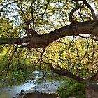 the tree - el arbol by Bernhard Matejka