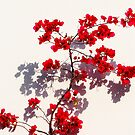 Red on White by iamelmana