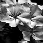 Soft Flowers - Black & White by Tony Stefanovski