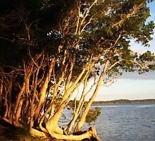 Myall Lakes at Sunset by Cheryl Parkes