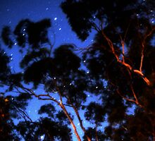 Star trails & eucalypts by Duncan Waldron