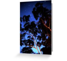 Star trails & eucalypts Greeting Card