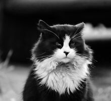 Majestic Moggy by GreyFeatherPhot