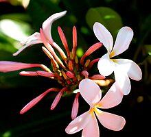 Plumeria Summer by TWindDancer