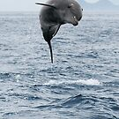Jumping Dolphin II by Steve Bulford