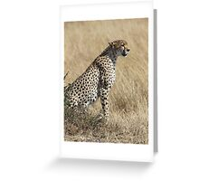 Looking About Greeting Card