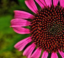 Peep of Pink by Kathleen   Sartoris