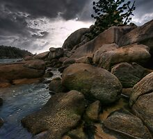 Pine Coast Dawn by Robert Mullner