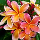 Plumeria....Penang Peach by Magee