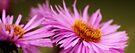 Think pink by Purplecactus