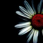 Daisies Have Darksides too by Jenny Ryan