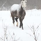 Snow Covered Horse in a Field by Mark Van Scyoc