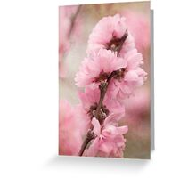 Spring arrives softly Greeting Card