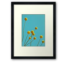 Billy Buttons Framed Print