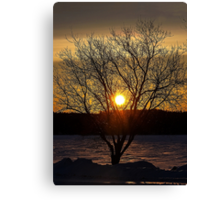 Lonely Evening Tree Canvas Print