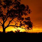 Sunset at Edeowie Station by Pamela Inverarity