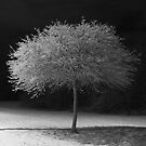 Midnight Tree by cforsythe