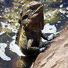 Mr Lizard Praying! by caz60B