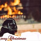 Puppy Love Christmas by Visual   Inspirations
