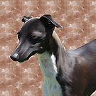 Italian Greyhound.. by Cazzie Cathcart