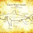 Great White Shark Illustration by marcodeobaldia