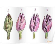 Collected Study of a Cut Tulip Poster