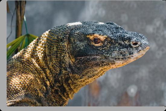 Komodo Monitor by Frank Yuwono