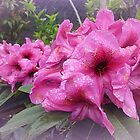 *Rhododendron at Sassafras - Dandenong Ranges* by EdsMum