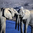 Elephants sparring at water hole by cascoly