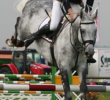 Grey Horse by scooby29