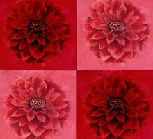 Blooming Dahlia Stars by CecelyBloom
