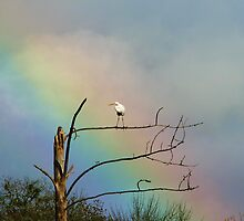 Great Egrets and Rainbows # 2 by Chuck Gardner