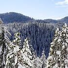 Snowy Forest - 1137 by BartElder