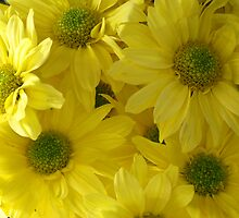 Yellow Daisies by Marilyn Harris