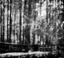 Spanish Moss hanging by a Web by AlixCollins