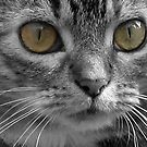 Cat's Eyes by Luci Mahon