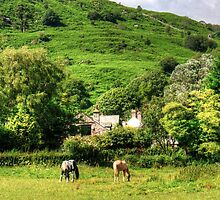 Horses in Eskdale by Tom Gomez