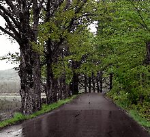 The Maples of George Road After Spring Rain by Wayne King